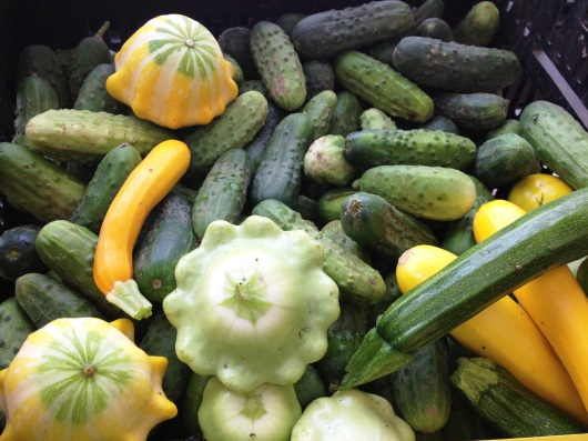 squash_and_cukes