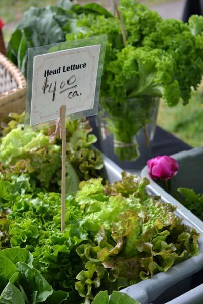lettuce2 sm