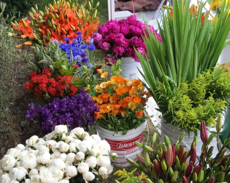thong xiong garden_flowers2